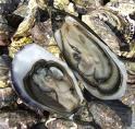 Kookwedstrijden rondom vis op Zeeuwse Horeca Beurs