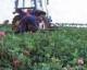 Attachment biologische tuinbouw 80x64