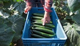 Gezond en duurzaam eten en drinken voor senioren in Den Helder