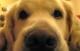 Attachment hond voor gz 80x51