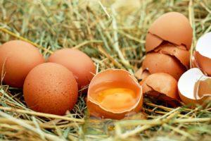 Hoe gaan cateraars met nieuws van besmette eieren om?