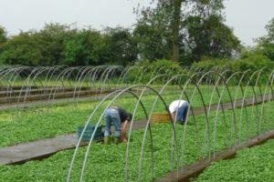 Gezonde Korte Ketens verbindt agri/food-ondernemers en zorg