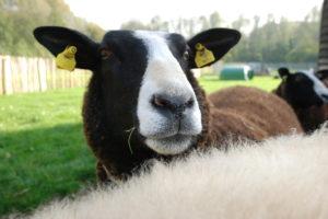 Dieren in de zorg: drie voorbeelden uit de praktijk