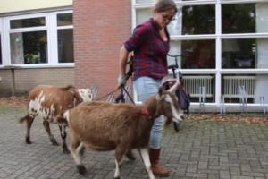 VIDEO: Mobiele kinderboerderij vertedert ouderen met dementie